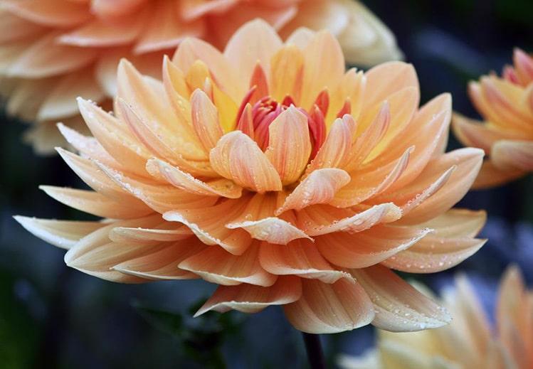 feminine energy flower