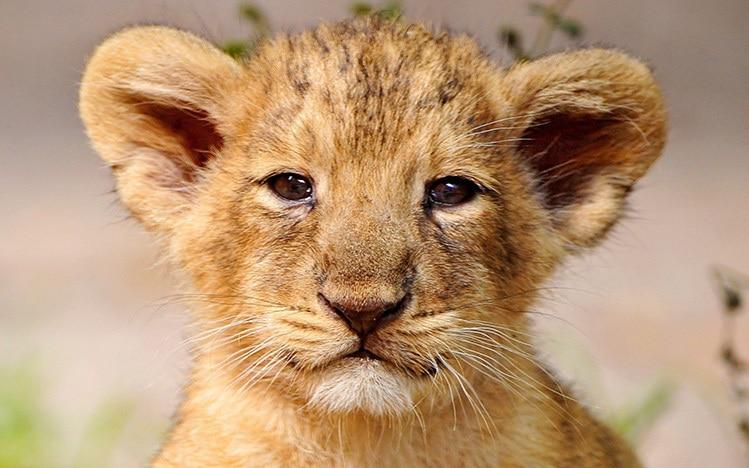 30 days of discipline pdf lion