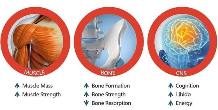 Benefits of MK-2866 Ostraine